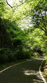 20180512原生の森008