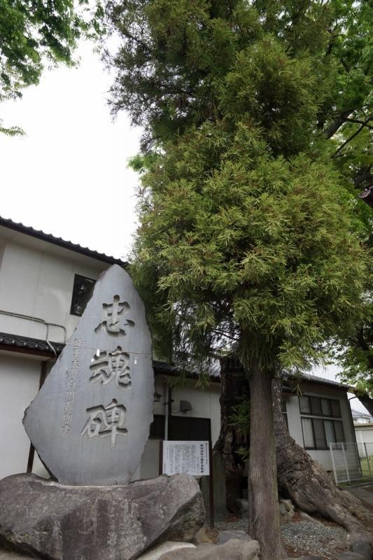 3木 (800x1200)