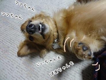 kinako3068.jpg