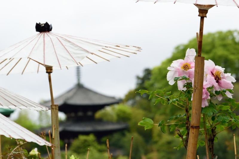 塔と傘と牡丹DSC_0007