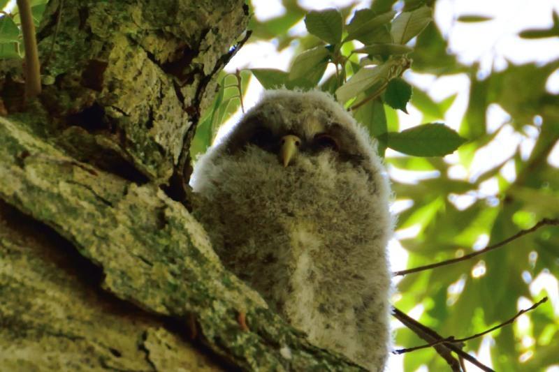 樹の上の子DSC_0048