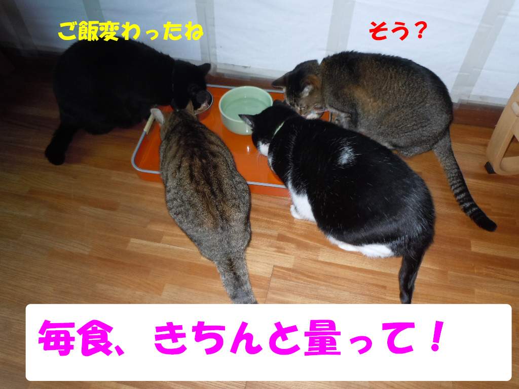 くろダイエット2