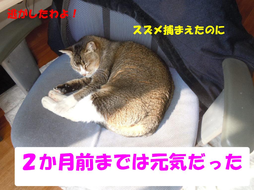 ツーちゃん別れ2-2