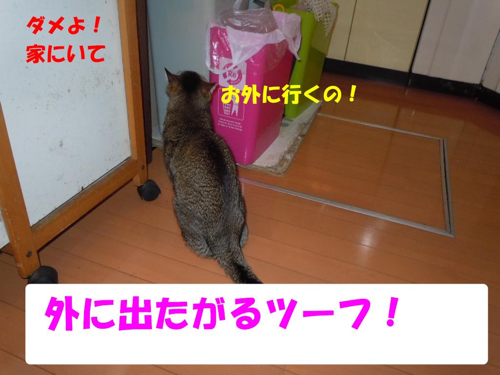 ツーちゃん別れ4