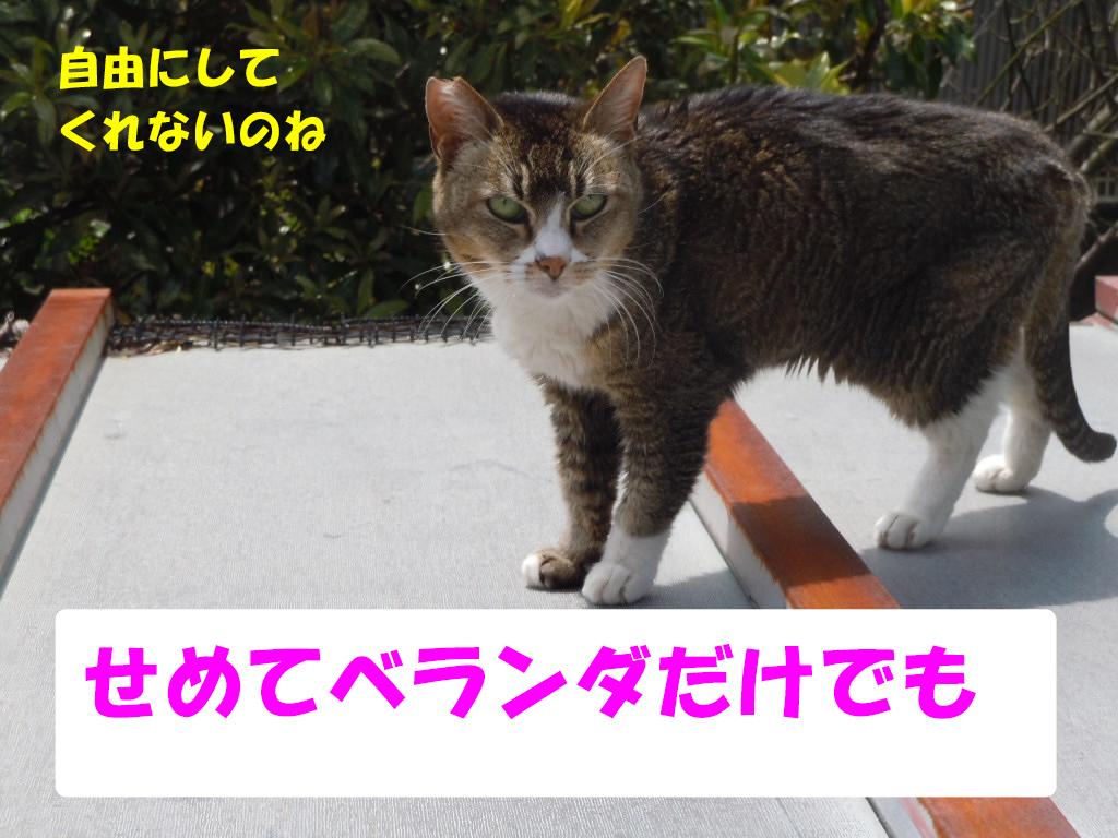 ツーちゃん別6