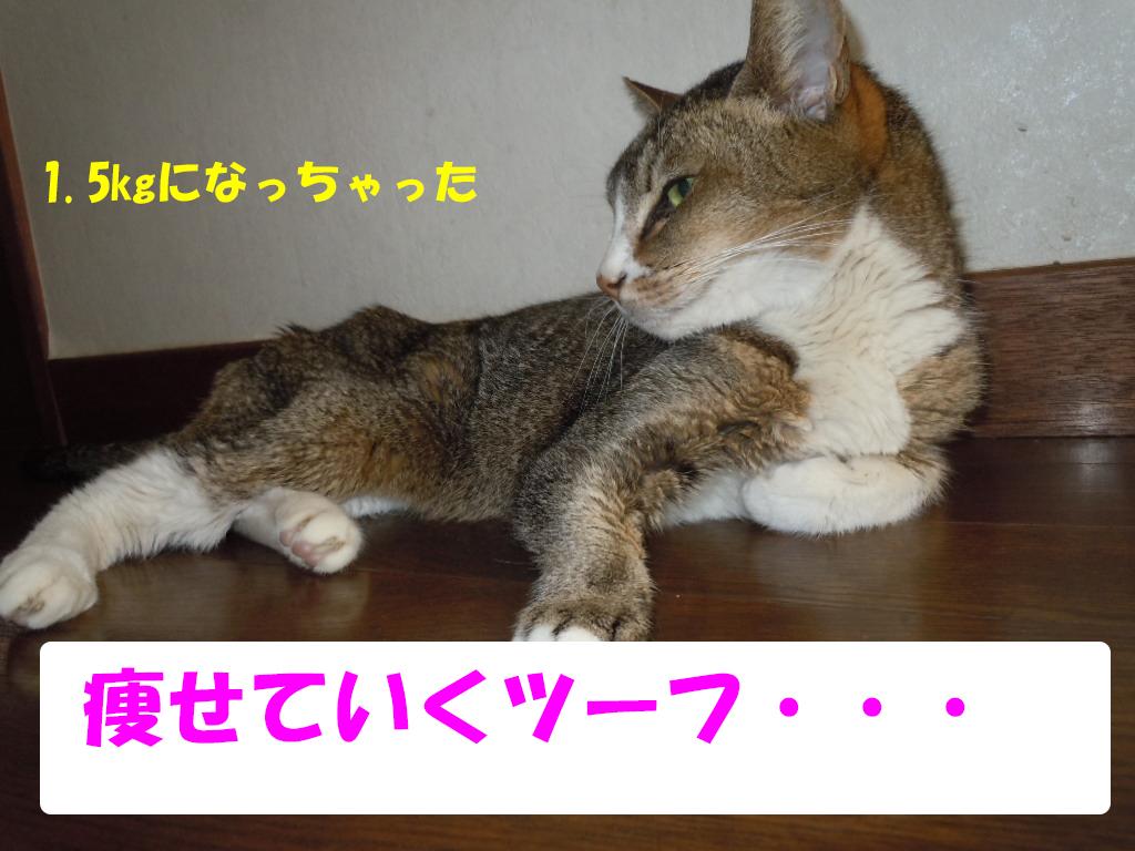 ツーちゃん別7