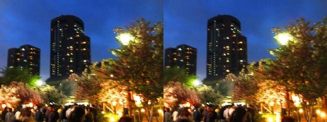 造幣局 桜の通り抜け 夜桜⑰(交差法)
