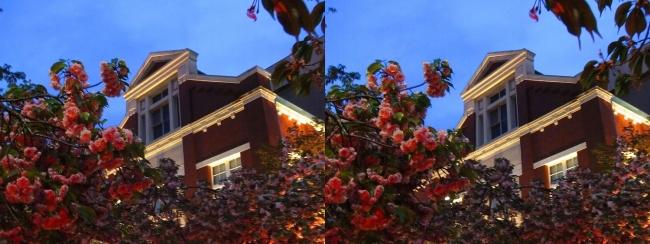 造幣局 桜の通り抜け 夜桜⑮(平行法)