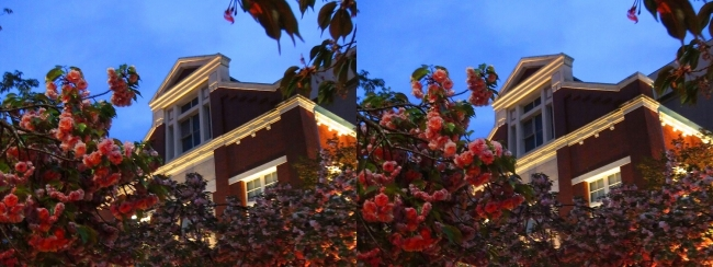 造幣局 桜の通り抜け 夜桜⑮(交差法)