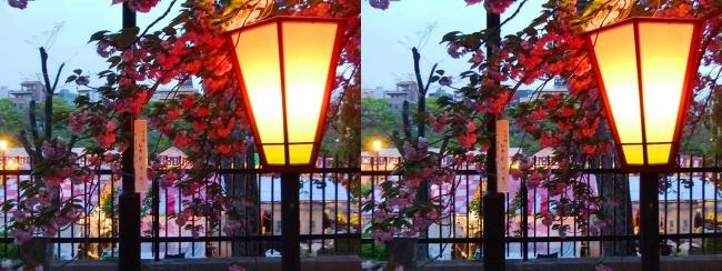 造幣局 桜の通り抜け 夜桜⑤(平行法)