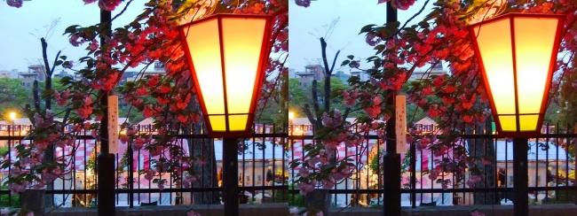 造幣局 桜の通り抜け 夜桜⑤(交差法)