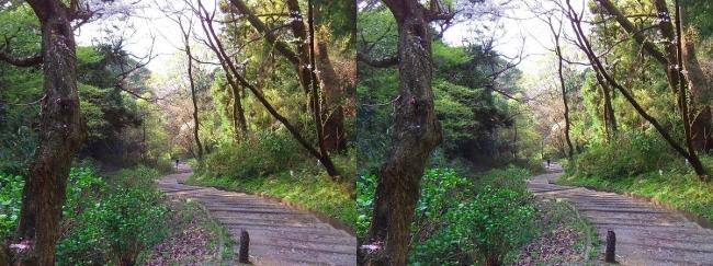 枚岡公園 枚岡山下山⑤(平行法)