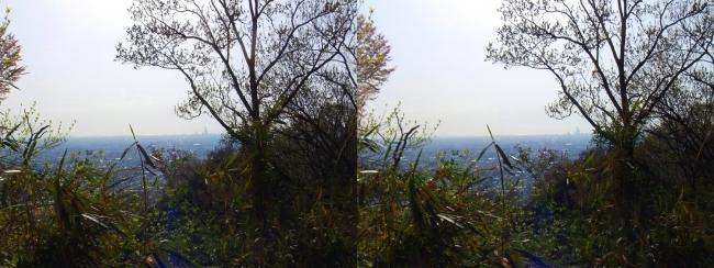 枚岡公園 枚岡山下山④(平行法)