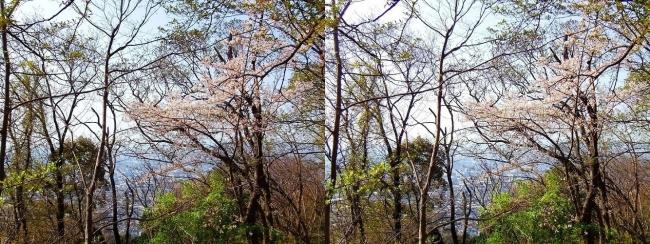 枚岡公園 枚岡山下山①(平行法)