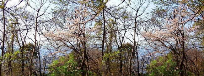 枚岡公園 枚岡山下山①(交差法)