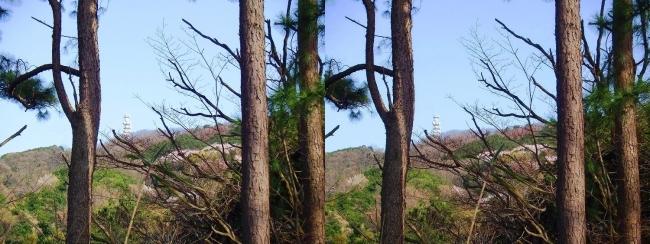 枚岡公園 神津嶽山頂②(交差法)