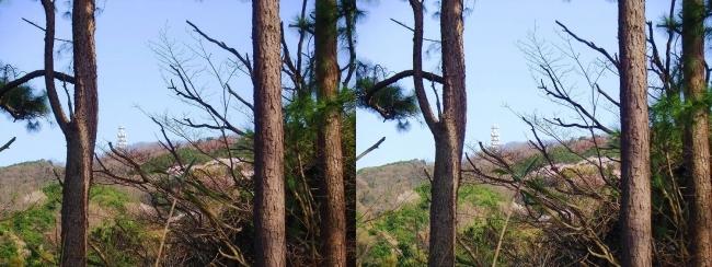 枚岡公園 神津嶽山頂②(平行法)