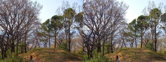 枚岡公園 神津嶽山頂①(平行法)