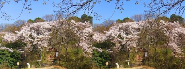 枚岡公園 神津嶽への道(交差法)