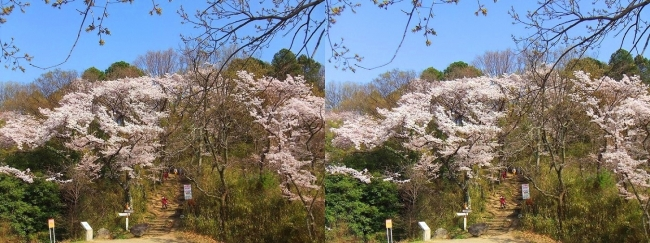 枚岡公園 神津嶽への道(平行法)