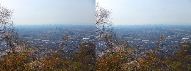 枚岡公園 枚岡山頂の桜③(平行法)