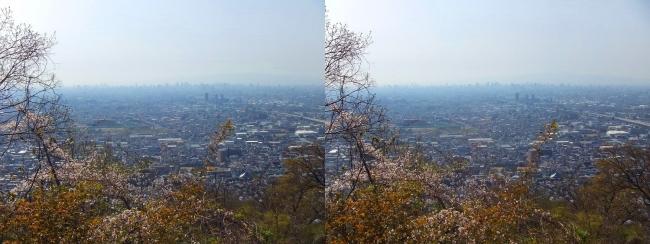 枚岡公園 枚岡山頂の桜③(交差法)