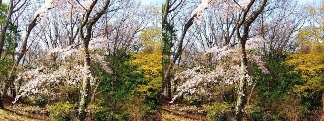 枚岡公園 枚岡山展望台への道③(交差法)