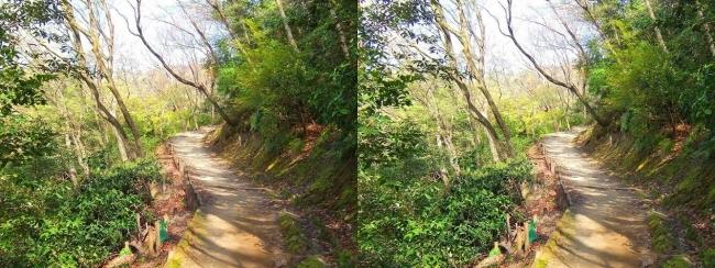 枚岡公園 枚岡山展望台への道①(平行法)