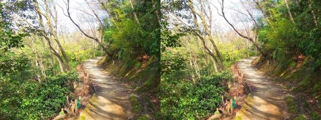 枚岡公園 枚岡山展望台への道①(交差法)