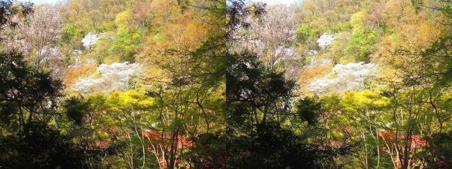 枚岡公園 桜広場・豊浦橋(平行法)