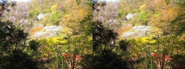 枚岡公園 桜広場・豊浦橋(交差法)