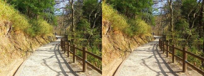 枚岡公園 桜広場への道(交差法)