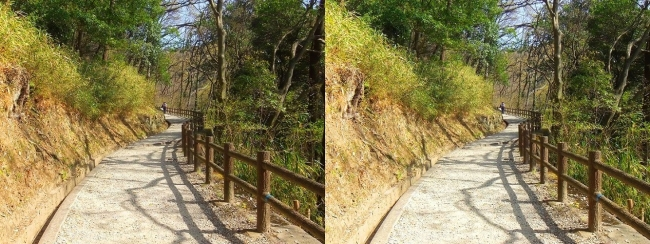 枚岡公園 桜広場への道(平行法)