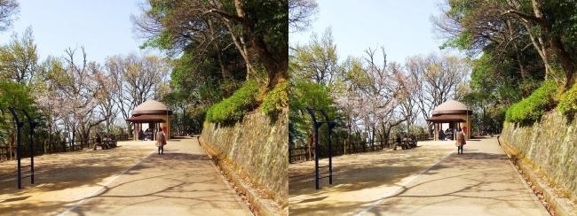 枚岡公園 森のおもちゃ箱①(平行法)