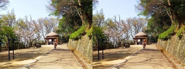 枚岡公園 森のおもちゃ箱①(交差法)