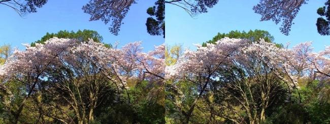 枚岡公園 中の谷②(平行法)