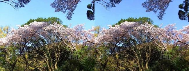 枚岡公園 中の谷②(交差法)