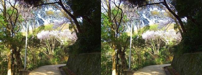 枚岡公園 中の谷①(平行法)