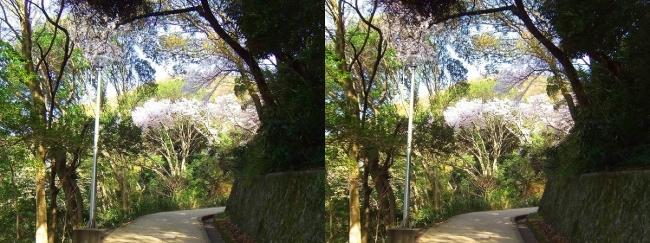 枚岡公園 中の谷①(交差法)