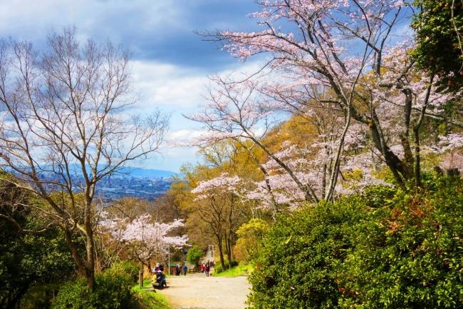 枚岡公園桜広場