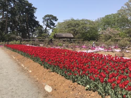 【須賀川市の牡丹園】・4