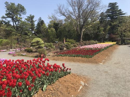 【須賀川市の牡丹園】・3