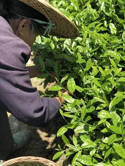 2018年武夷山岩茶―2