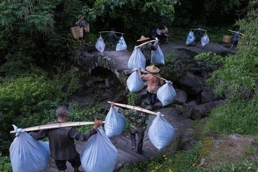2018年製茶現場―6