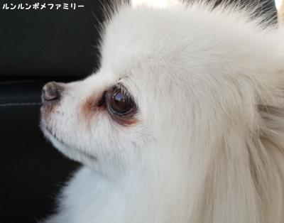 車 横顔 利温 イケメン