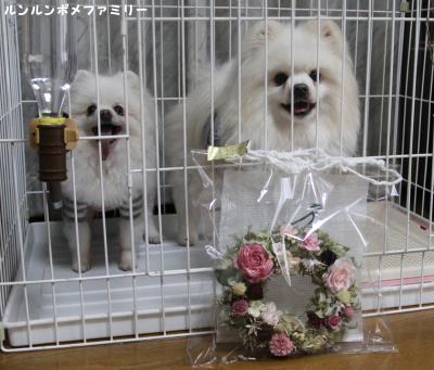 愛犬とリース