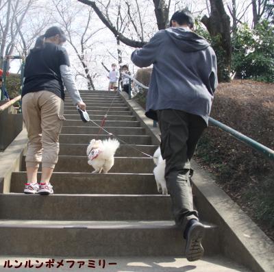階段を登るよ