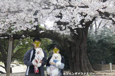 桜4ショットアップ
