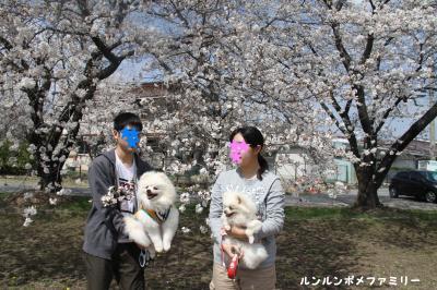 三角公園 桜4ショット