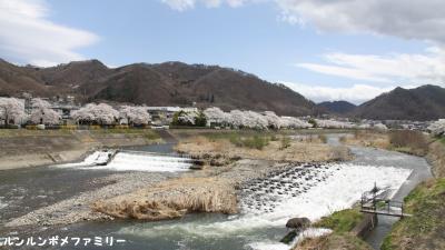 依田川と桜並木